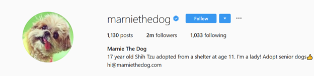 How do Famous People Write their Bio on Instagram?